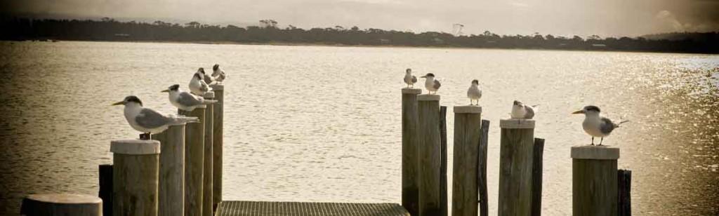 swansea, east coast, tasmania