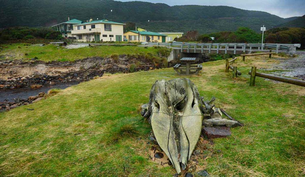 trial harbour, west coast of tasmania, vandiemans land, mining in tasmania, tasmania, zeehan, heemskirk, whale skull